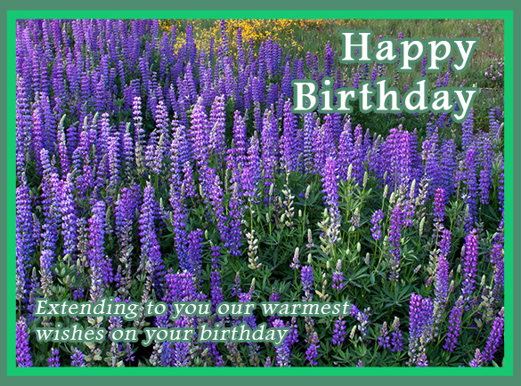 Birthday E Card Service Free Full Service Website Solutions For